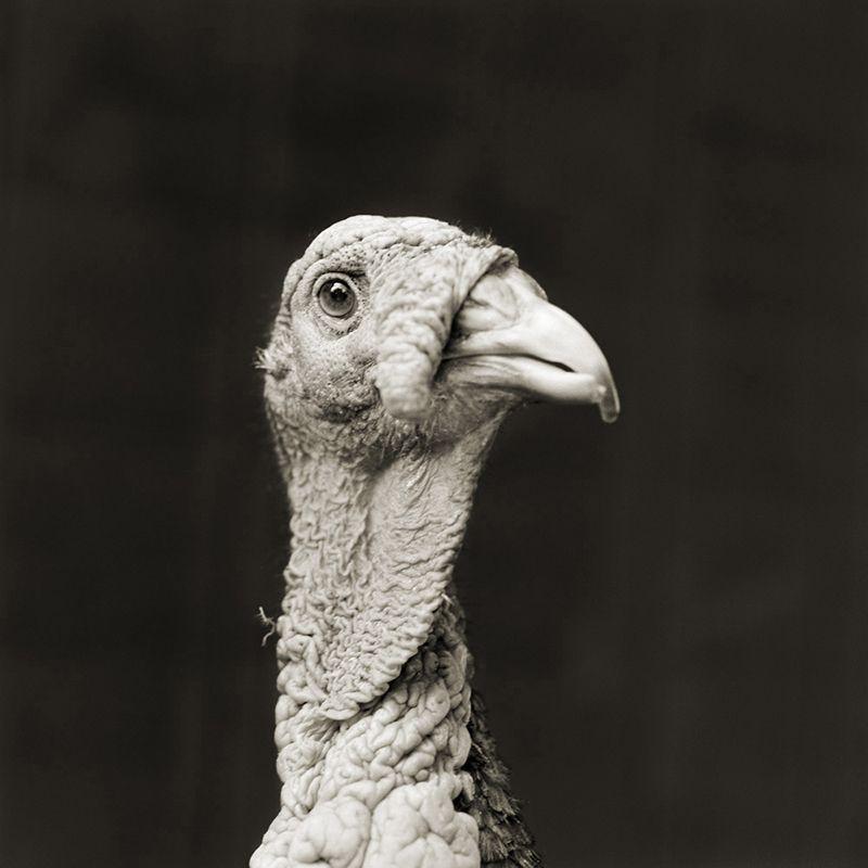 marino bronze turkey 5 elderly animals isa leshko Touching Portraits of Elderly Animals