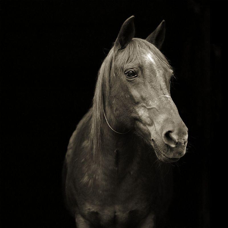 pumpkin morgan arabian horse 28 elderly animals isa leshko Touching Portraits of Elderly Animals