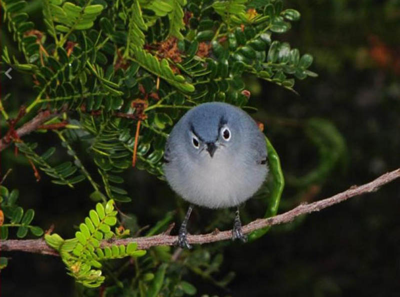 40 Real-Life AngryBirds