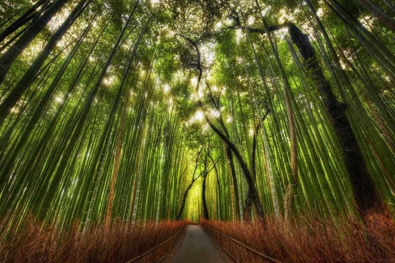 sagano bamboo forest grove arashiyama kyoto japan The Wisteria Flower Tunnel at Kawachi Fuji Garden