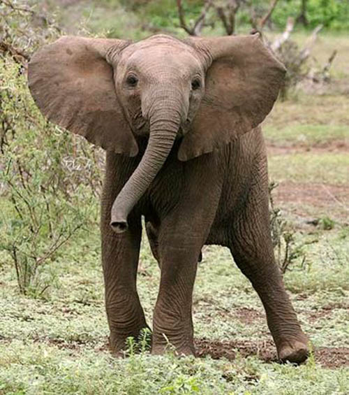 adorable baby elephant 5 The 35 Cutest Baby Elephants You Will See Today
