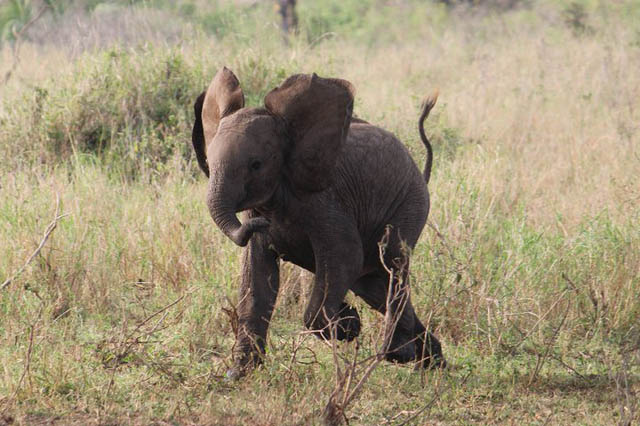 adorable baby elephant 6 The 35 Cutest Baby Elephants You Will See Today