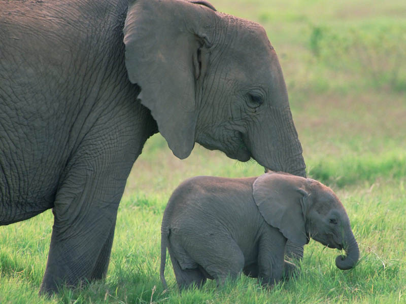 adorable baby elephant 8 The 35 Cutest Baby Elephants You Will See Today