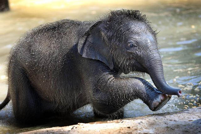 adorable baby elephant 9 The 35 Cutest Baby Elephants You Will See Today