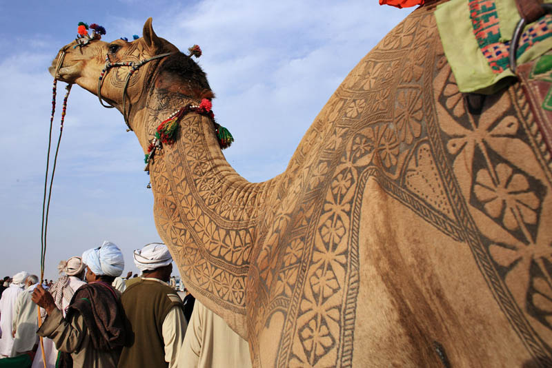 An Amazing Gallery of Camel Hair Art