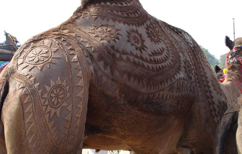 camel hair trimming art 1 An Amazing Gallery of Camel Hair Art