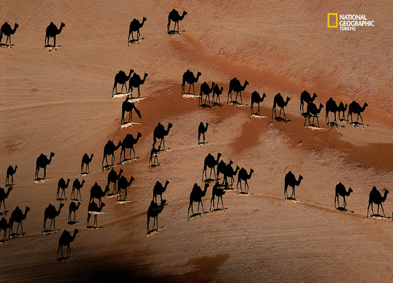 camel shadows from above aerial george steinmetz 12 Optical Illusions Made from Shadows