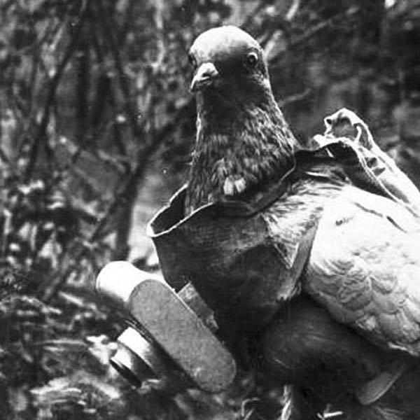 camera on pigeon aerial photography The History of Pigeon Camera Photography