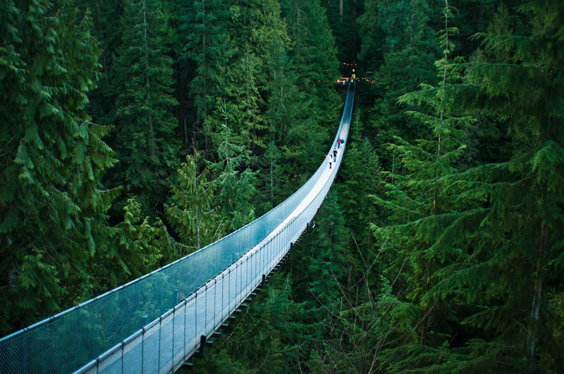 capilano suspension bridge in vancouver The Top 50 Pictures of the Day for 2012