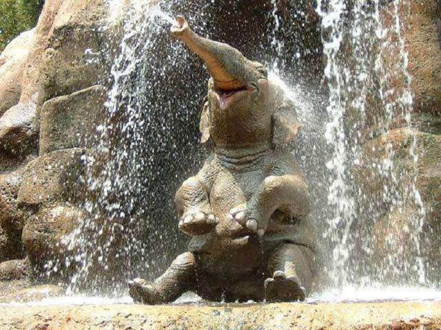cute baby elephant 5 The 35 Cutest Baby Elephants You Will See Today