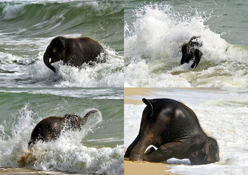 cute-baby-elephant-8.jpg