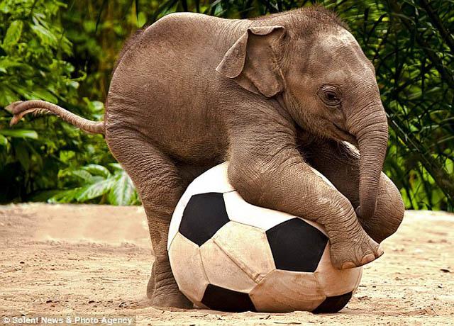 cute-baby-elephant-9.jpg