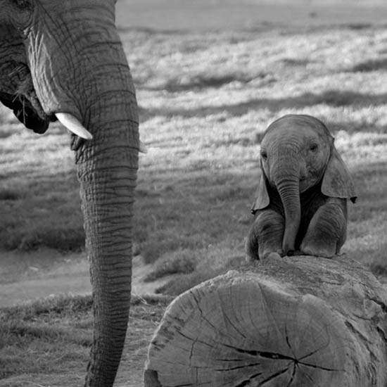 funny baby elephant 7 The 35 Cutest Baby Elephants You Will See Today