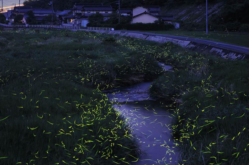 Beautiful Long Exposures Of Fireflies At Night 171 Twistedsifter