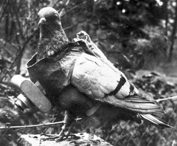 pigeon camera aerial photography The History of Pigeon Camera Photography