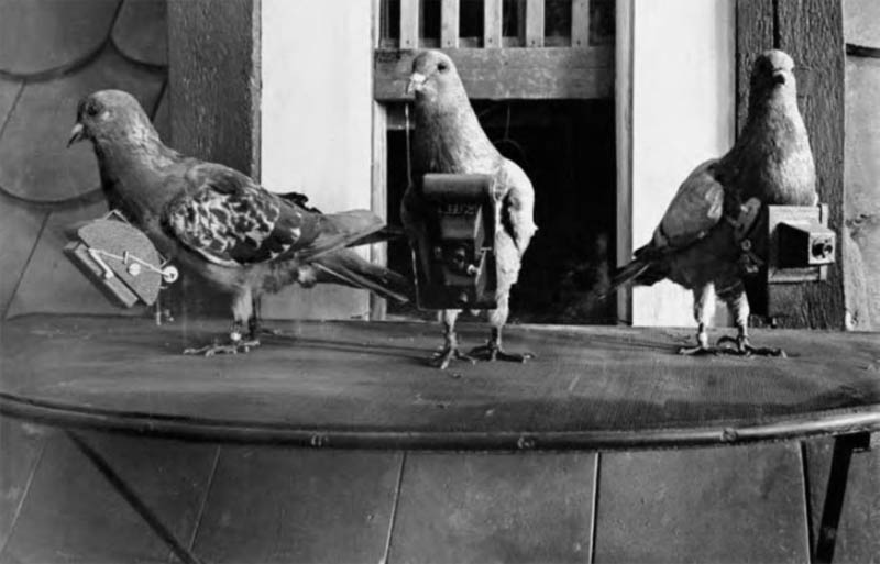 pigeon cameras aerial photography The History of Pigeon Camera Photography