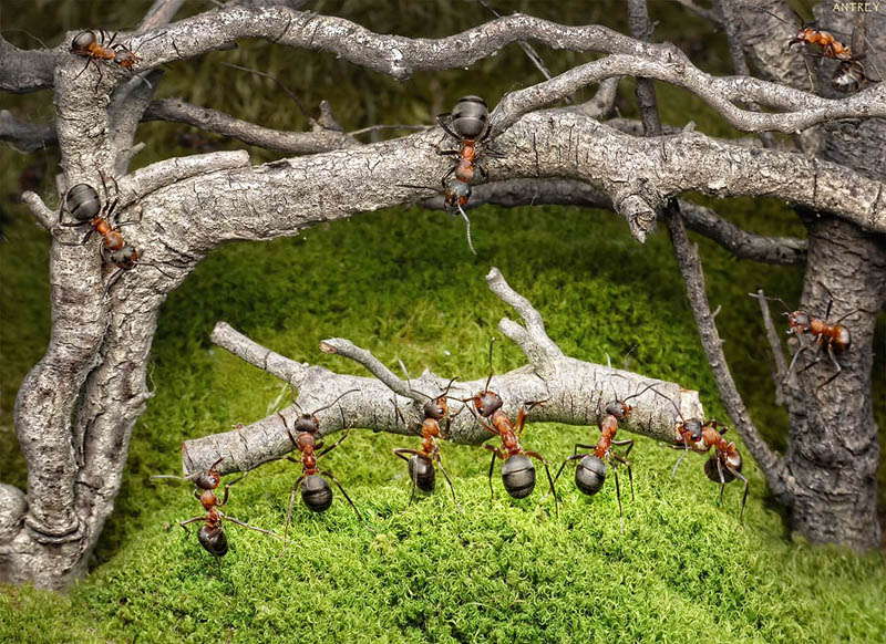 real ants in fantasy settings landscapes andrey pavlov 1 Real Ants in Fantasy Scenarios