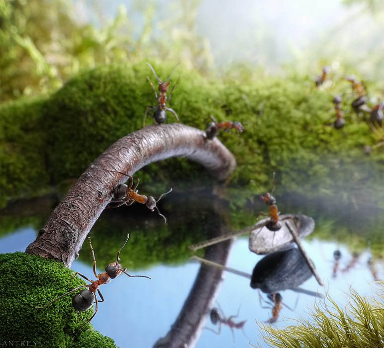 real ants in fantasy settings landscapes andrey pavlov 10 Real Ants in Fantasy Scenarios