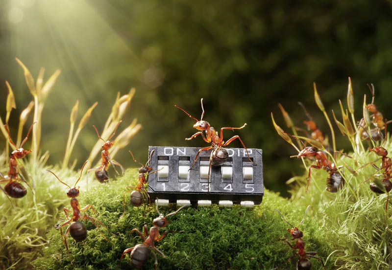real ants in fantasy settings landscapes andrey pavlov 11 Real Ants in Fantasy Scenarios