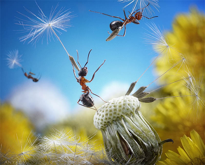 real ants in fantasy settings landscapes andrey pavlov 13 Real Ants in Fantasy Scenarios