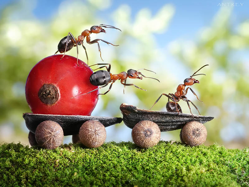 real ants in fantasy settings landscapes andrey pavlov 14 Miniature World Photo Manipulations by 14 year old Phenom