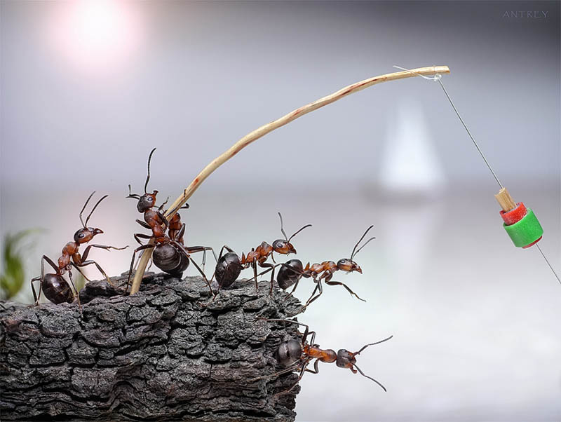 real ants in fantasy settings landscapes andrey pavlov 16 Real Ants in Fantasy Scenarios