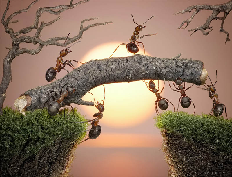 real ants in fantasy settings landscapes andrey pavlov 4 Real Ants in Fantasy Scenarios
