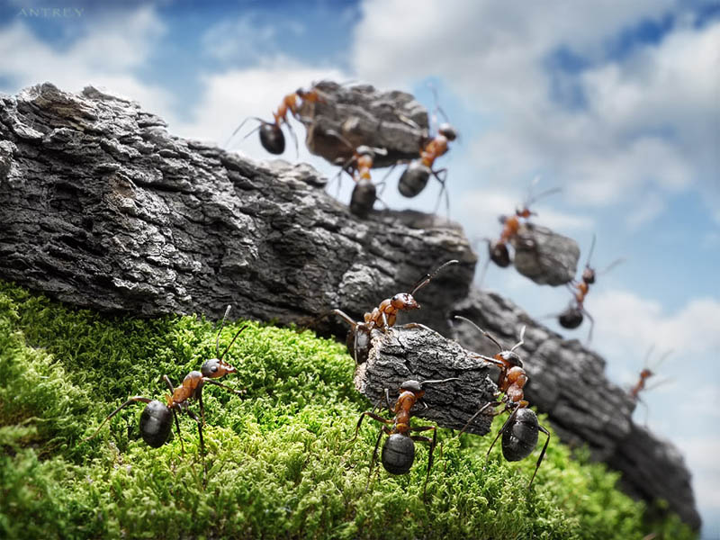 real ants in fantasy settings landscapes andrey pavlov 5 Real Ants in Fantasy Scenarios
