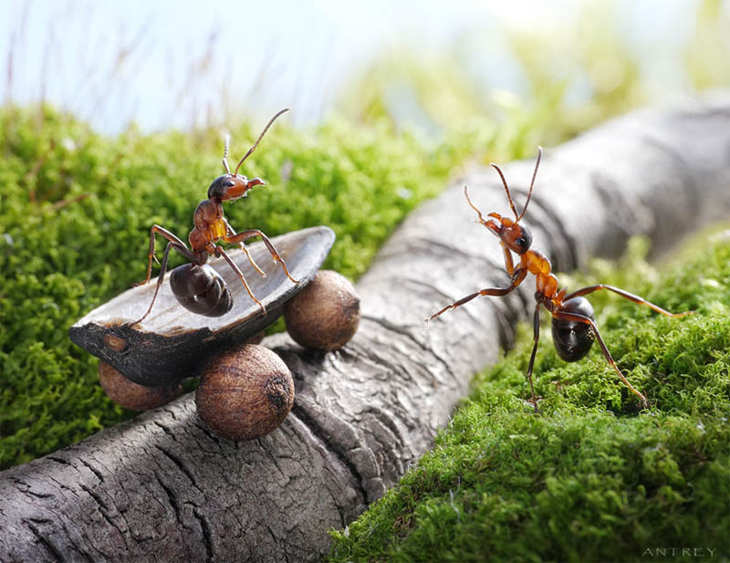 real ants in fantasy settings landscapes andrey pavlov 6 Real Ants in Fantasy Scenarios