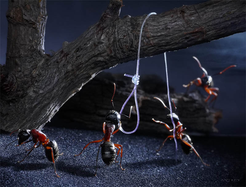 real ants in fantasy settings landscapes andrey pavlov 9 Real Ants in Fantasy Scenarios
