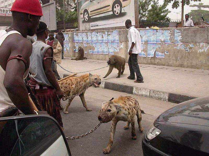 the hyena and other men pieter hugo 6 The Hyena Handlers of Nigeria