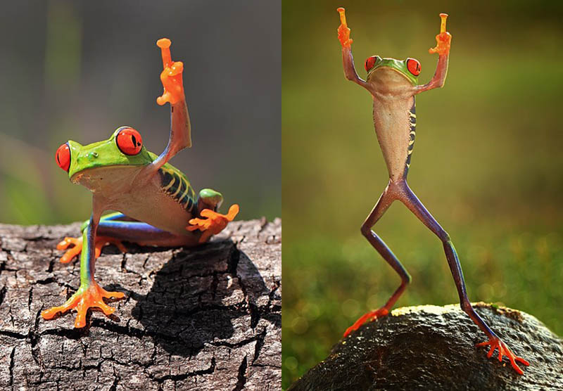 frog that looks like it is giving the middle finger