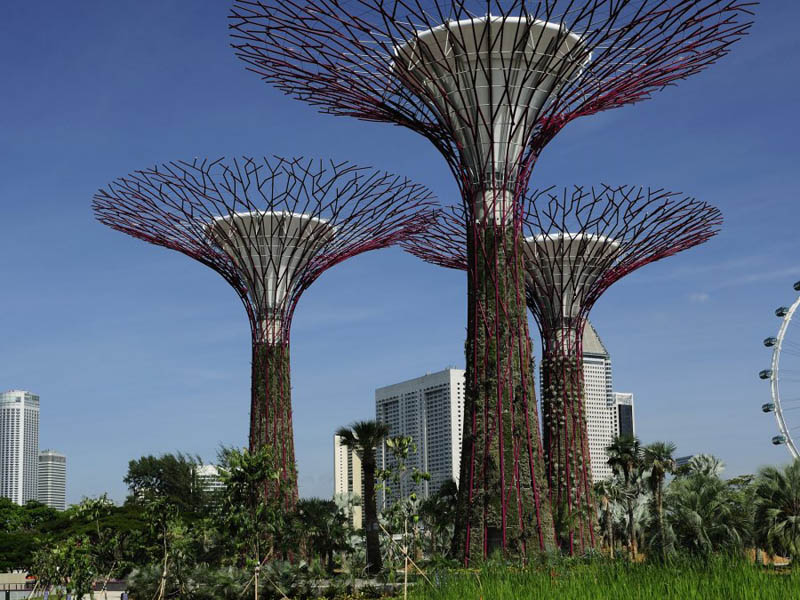 supertrees viewed from the ground