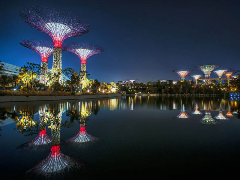 supertrees singapore at night lit up with marina bay in view