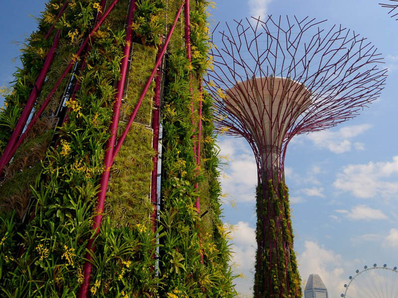 gardens by the bay supertrees singapore 7 The Supertrees of Singapore