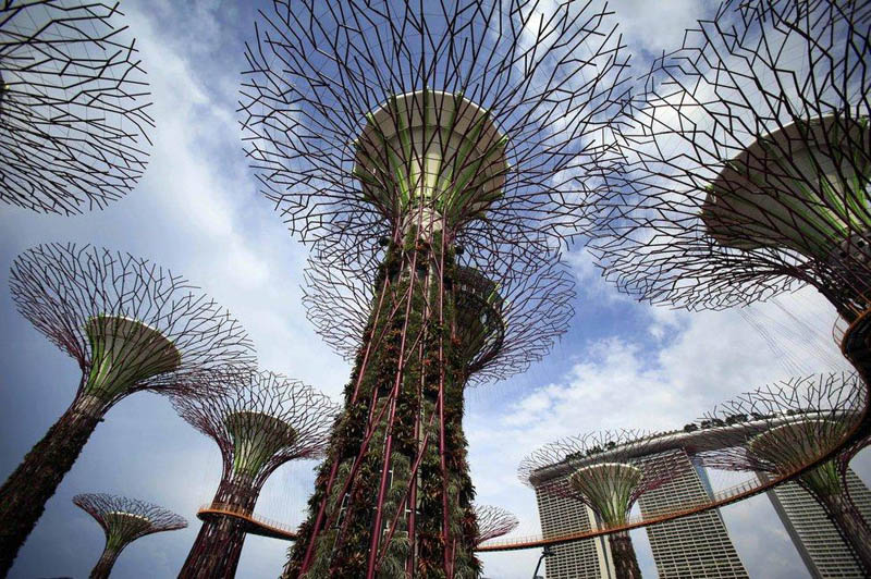 looking up the supertrees canopy with view of walkway and sky