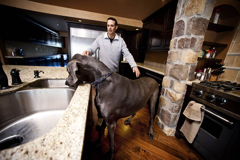 the tallest dog in the world in a kitchen