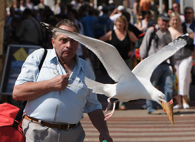 a seagull steals an ice cream cone from a man and flies away