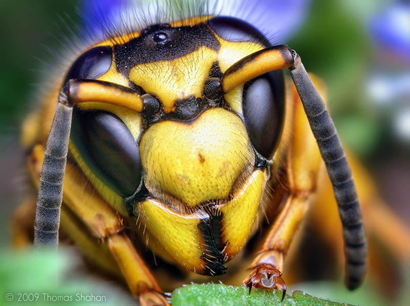 Macro Insect Photography by ThomasShahan