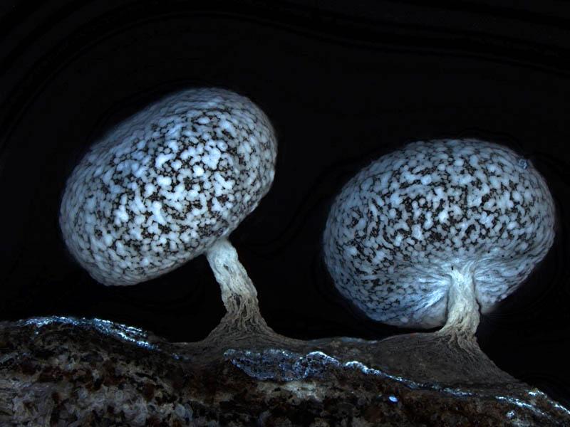2011 hm matysek physarum leucophaeum 20 Award Winning Microscope Images