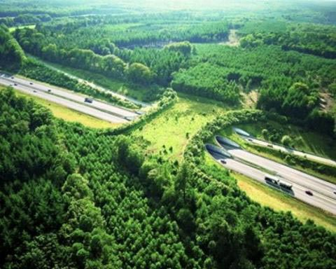 a50 netherlands animal bridge wildlife crossing overpass 12 Amazing Animal Bridges Around the World