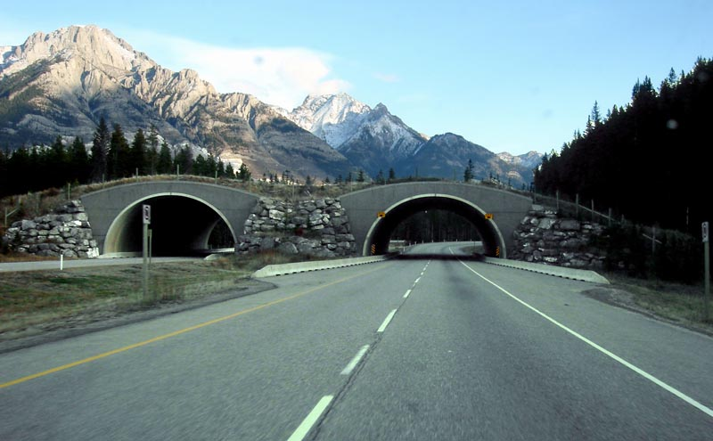 banff national park ablerta canada animal bridge wildlife crossing overpass 12 Amazing Animal Bridges Around the World