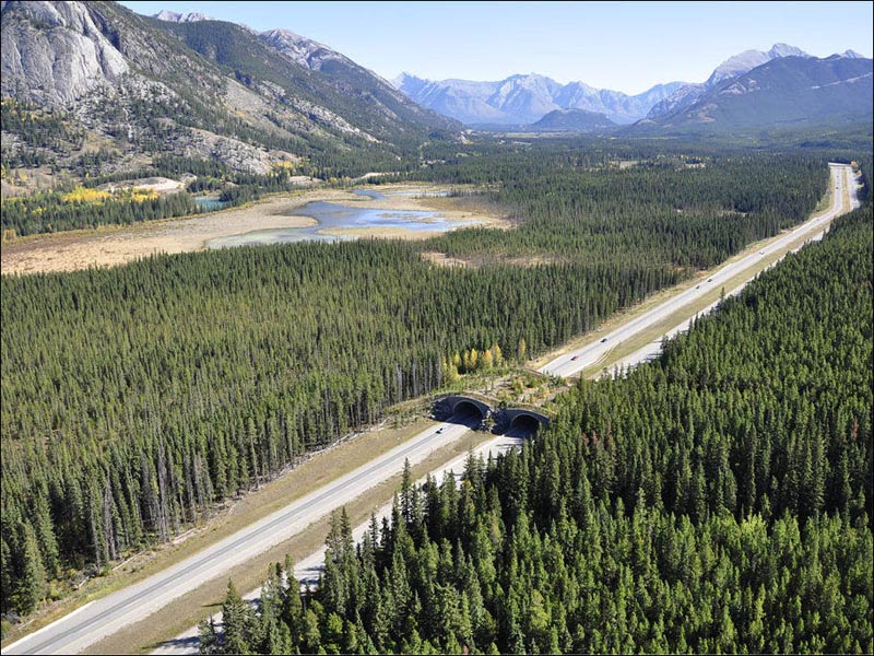 banff national park alberta animal bridge overpass wildlife crossing 12 Amazing Animal Bridges Around the World