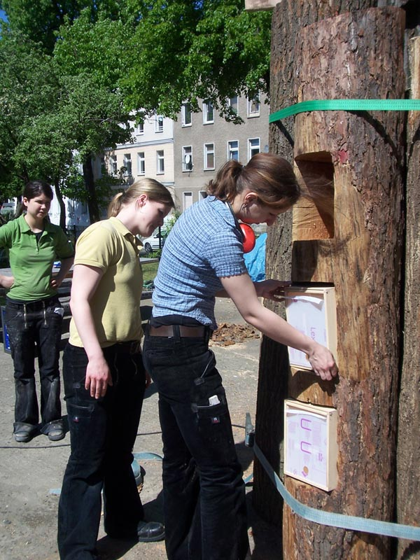 installing berlin book forest made from fallen trees