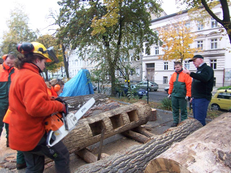 tree trunks turned into bookcases for public use in berlin germany