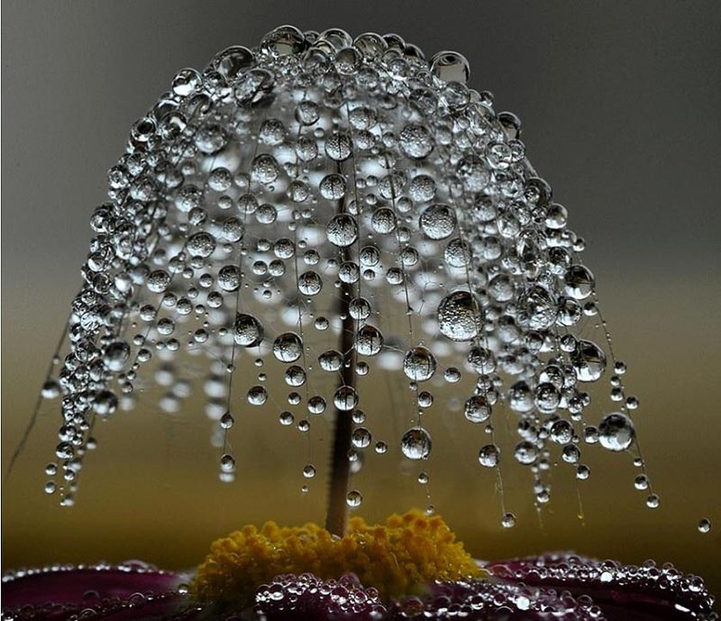 picture of the day  miniature dewdrop tree  u00abtwistedsifter