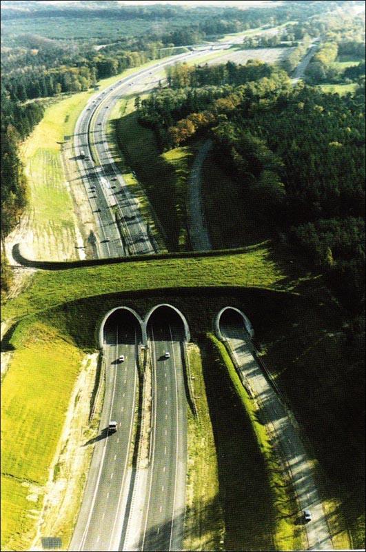 ecoduct in the netherlands animal bridge overpass wildlife crossing 12 Amazing Animal Bridges Around the World