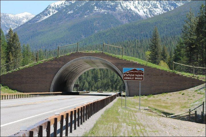 montana usa animal bridge wildlife crossing overpass 12 Amazing Animal Bridges Around the World