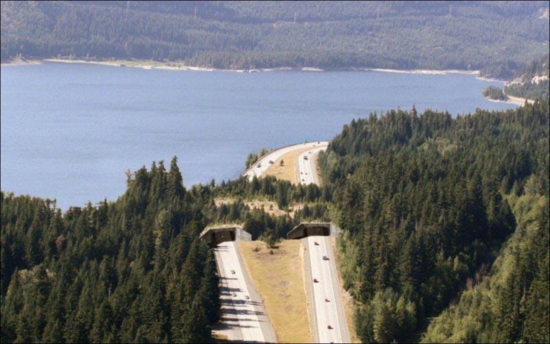 near keechelus lake washington usa animal bridge wildlife crossing overpass 12 Amazing Animal Bridges Around the World