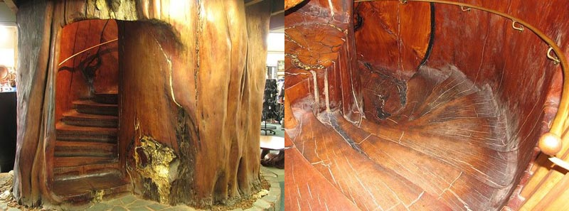 staircase inside tree trunk A Giant Gallery of Unique Staircase Designs
